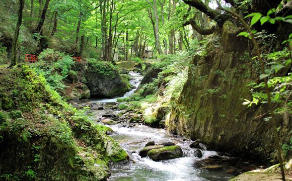 ミネラル豊富な名水「龍泉洞の水」
